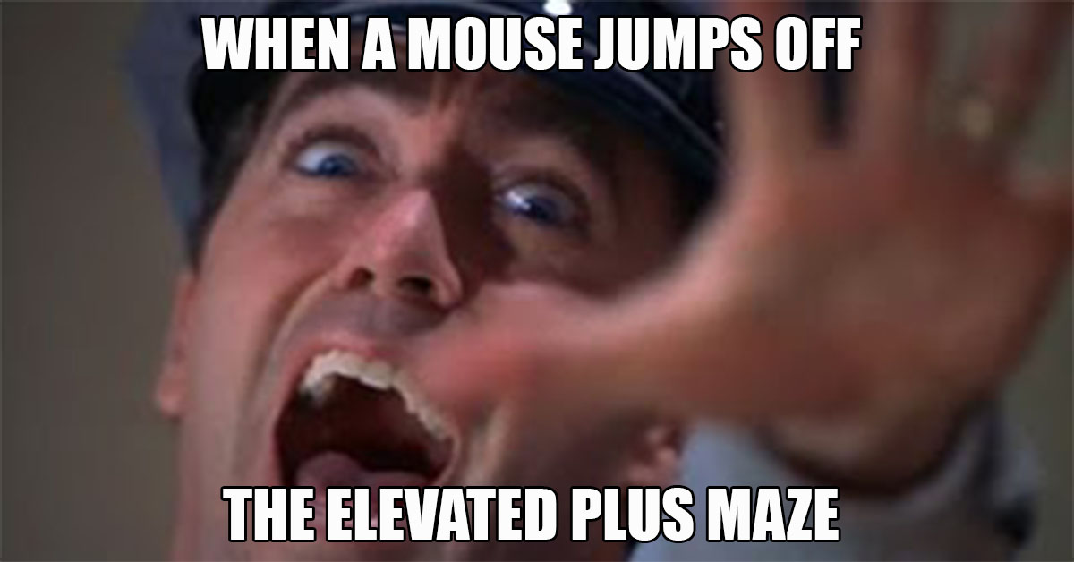 Meme - When a mouse jumps off the elevated plus maze