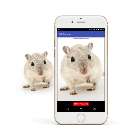 Mobile phone streaming video of a rodent